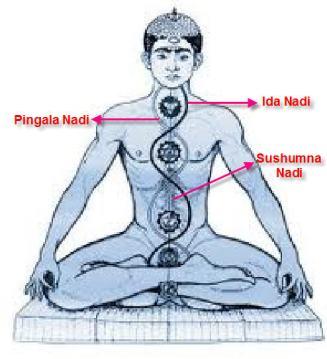 ida-pingal-sushumna-nadi-with-label